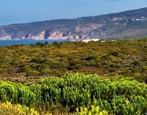 """<p>The Oitavos Dunes Golf Course is a lovely mix of woodland and linkstype holes. The course is about 25 minutes drive from Lisbon. Oitavos Dunes boasts a designation as one of """"Golf Magazine's"""" Top 100 in the World.</p>"""